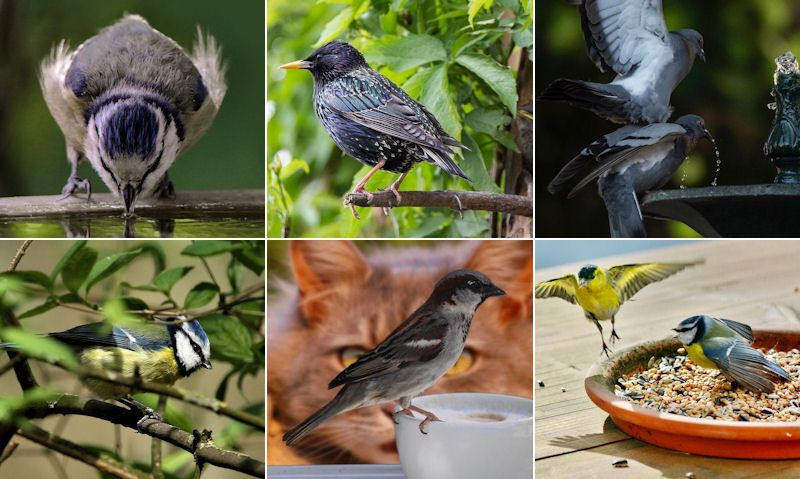 Attract birds to garden guide