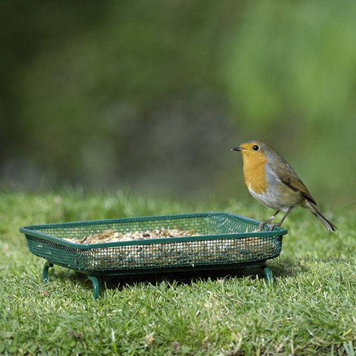 Robin perched on ground bird table