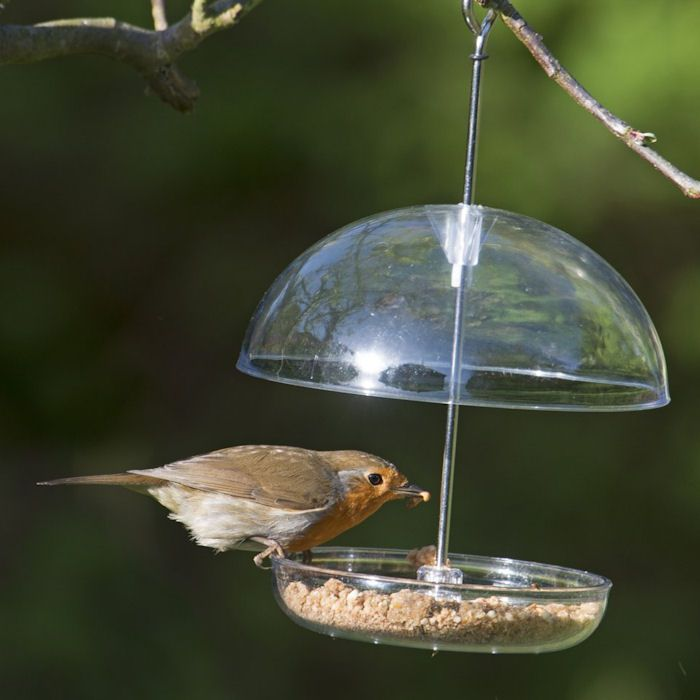 Robin eating from clear mealworm feeder