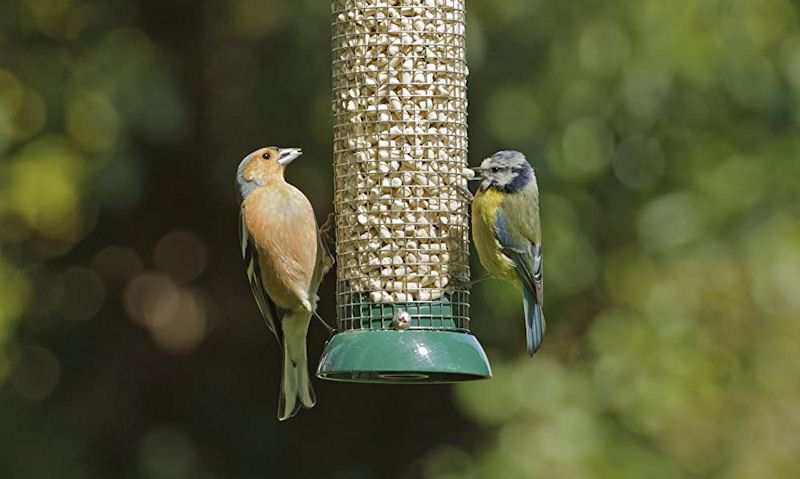 Finch, Blue Tit feeding off peanut feeder