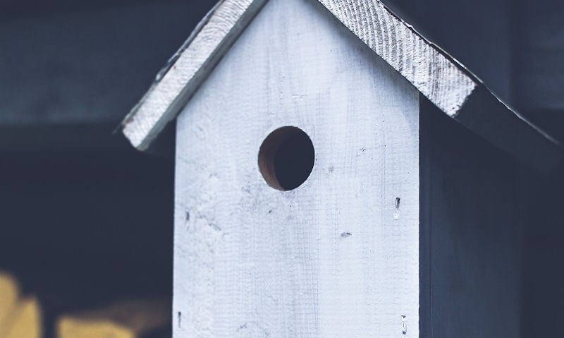 Best size HOLE for birdhouse