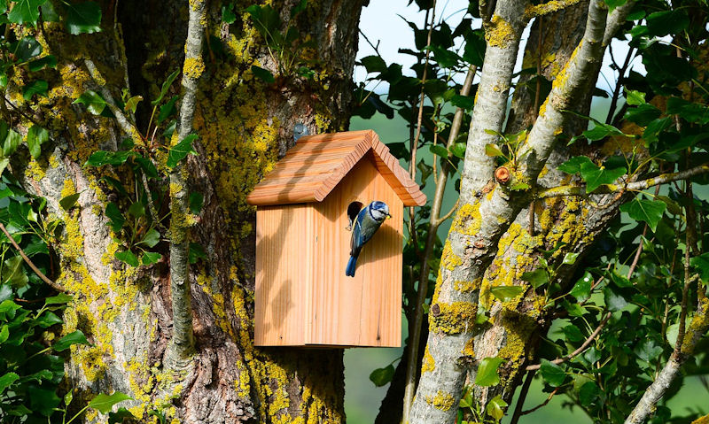 Best wood for bird boxes