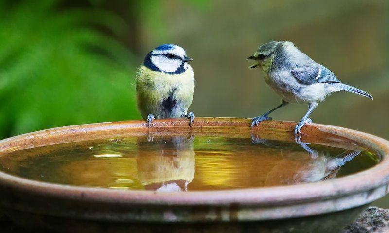 Bird Bath Benefits