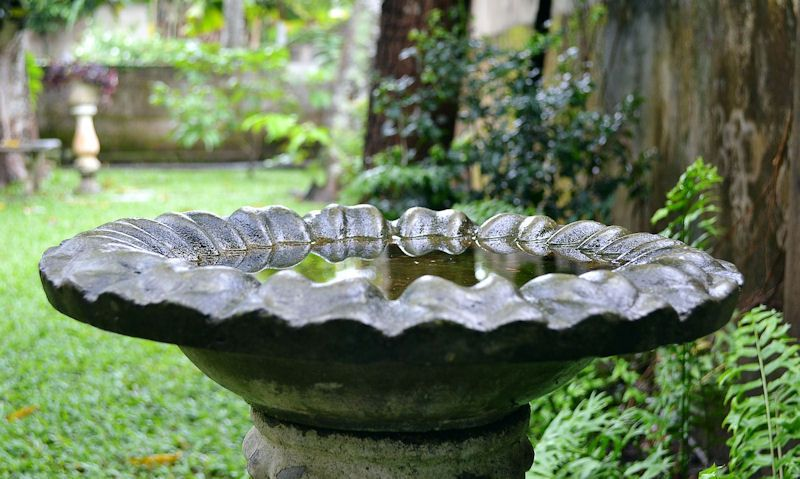 Stone pedestal bid bath in garden