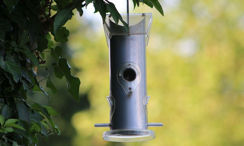 Marsh Tit using seed feeder