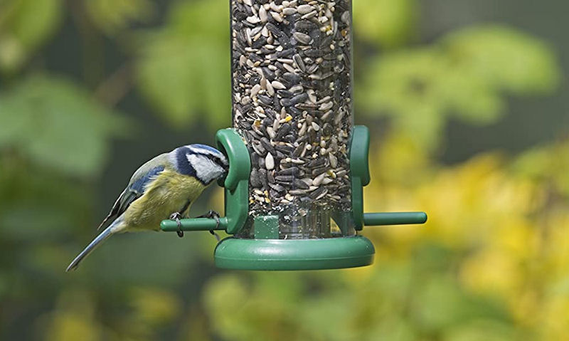 Blue Tit with his head inside the port hole of a seed feeder