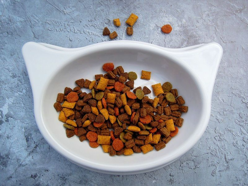 Bowl of dry cat food