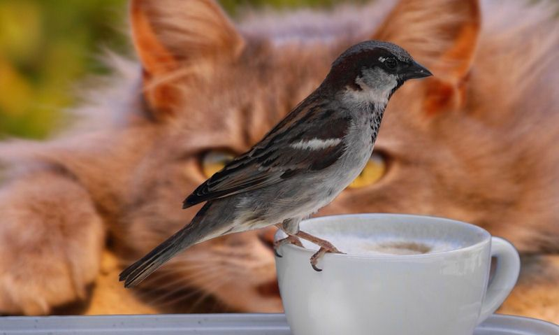 Cat in background watching Sparrow in foreground