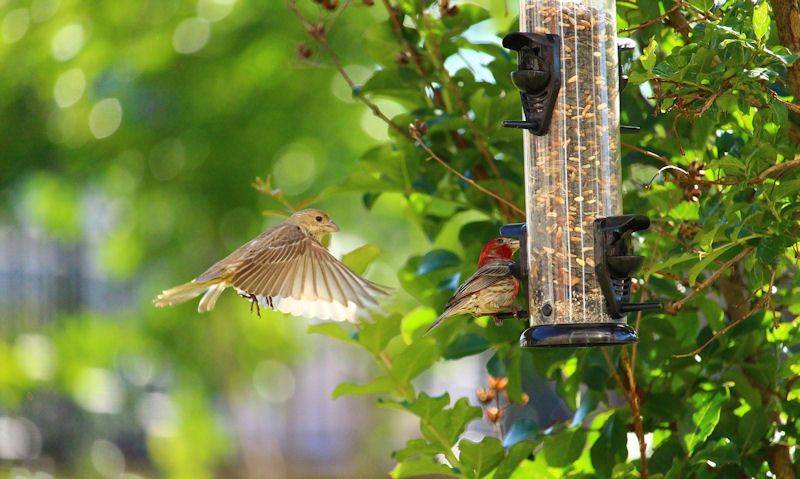 Wild birds using super clean seed feeder