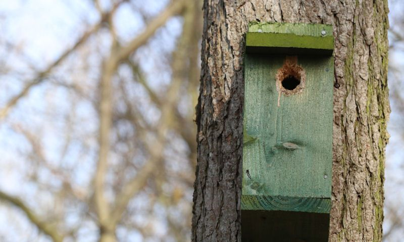 Weathered green bird box fixed to tree trunk