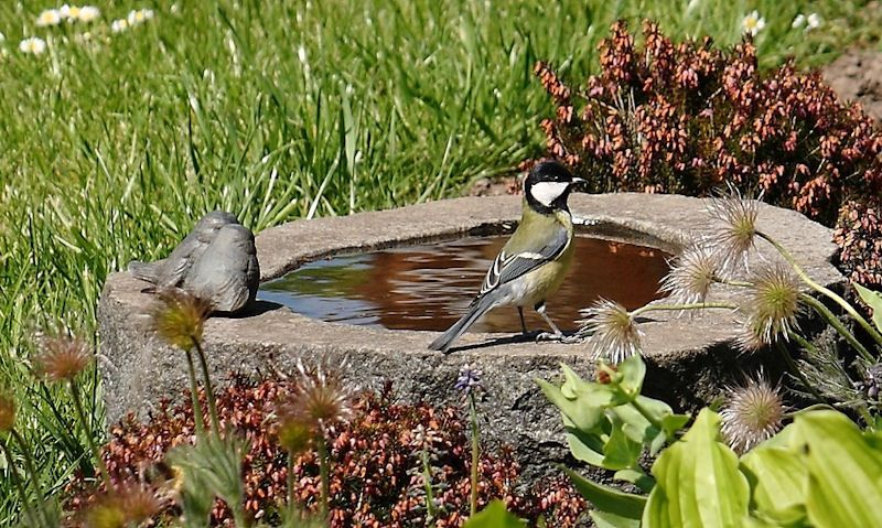 Coal Tit standing on stone ground bird bath