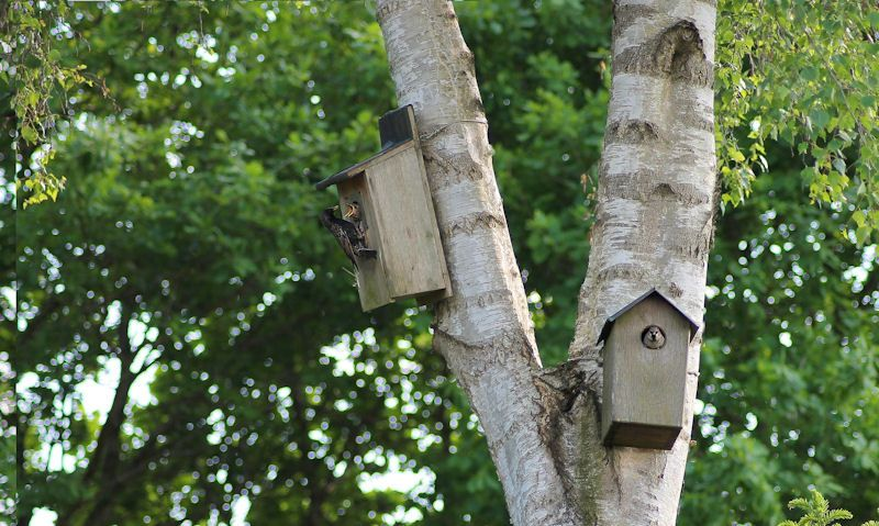 How far apart should bird boxes be