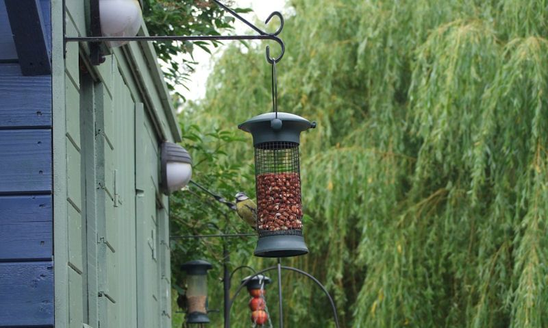 How HIGH should bird feeders be