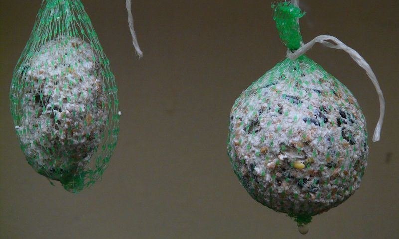 Fat balls hanging up in single-use plastic mesh netting
