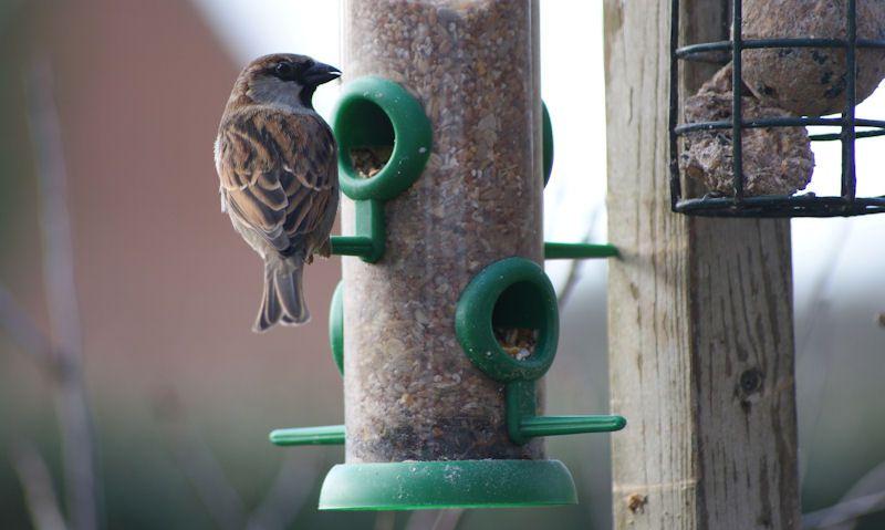 How often to clean bird feeders