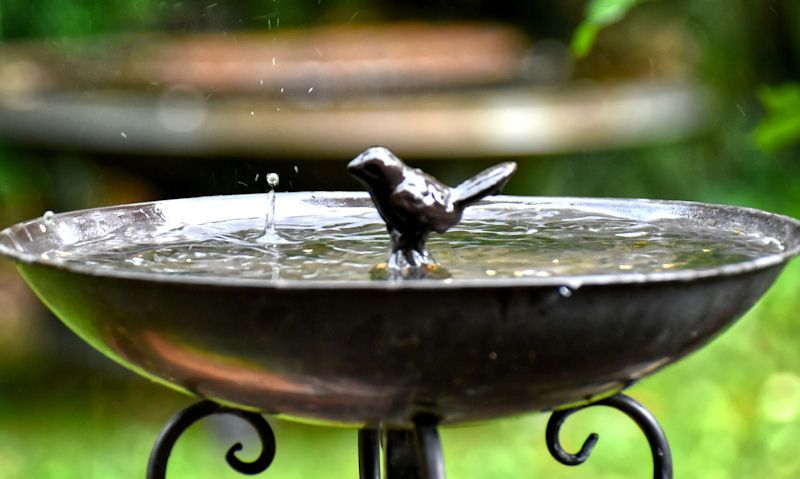 Filled with water garden bird bath