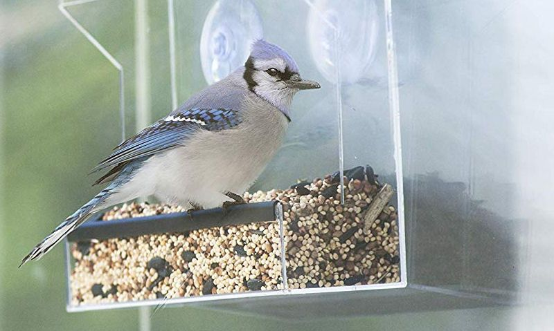 Bird feeding on window feeder