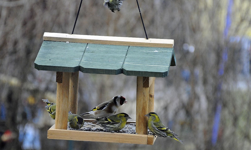 How to clean a bird table