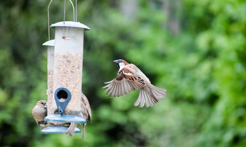 How to clean a tube bird feeder