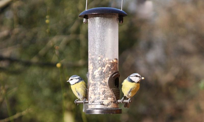 How to fill a bird feeder