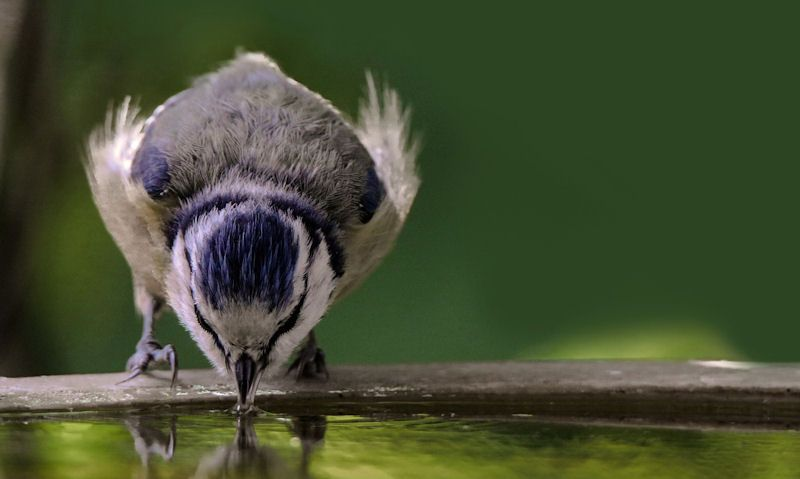 How to give birds water
