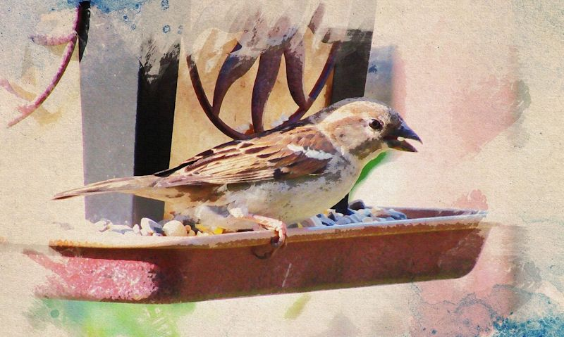 Oil painting effect bird on hanging feeder
