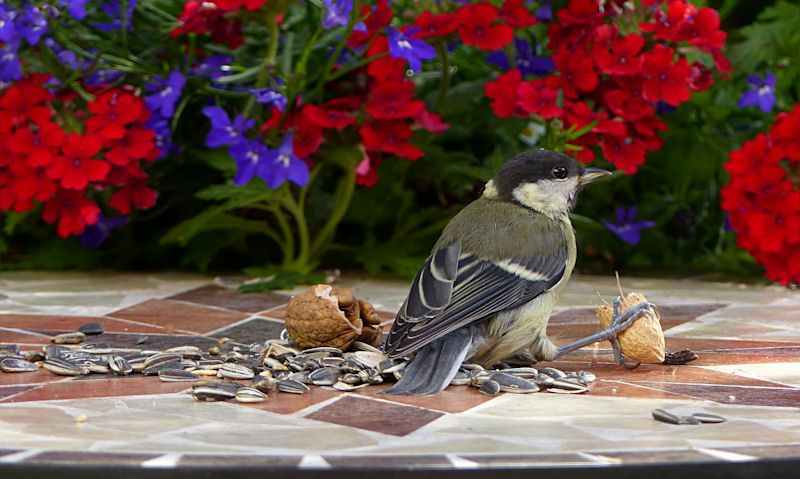 Is it bad to feed birds?