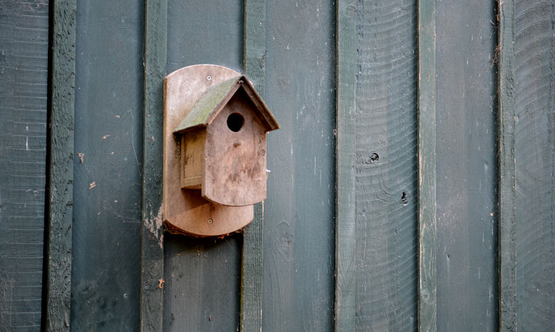 Wooden bird box mounted to side of painted shed