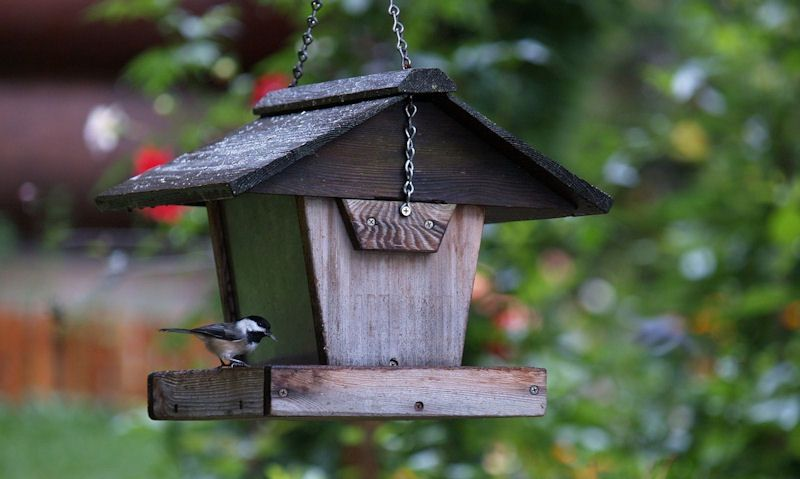 Coal Tit perched on hanging bird table
