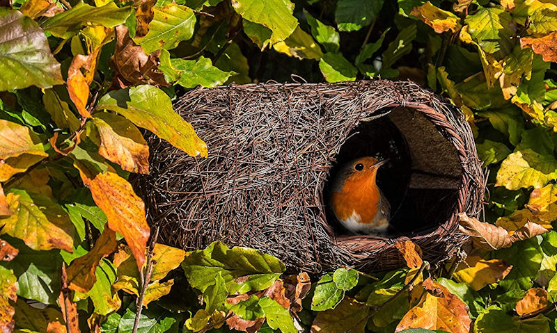 Robin seen inside natural Brushwood bird box