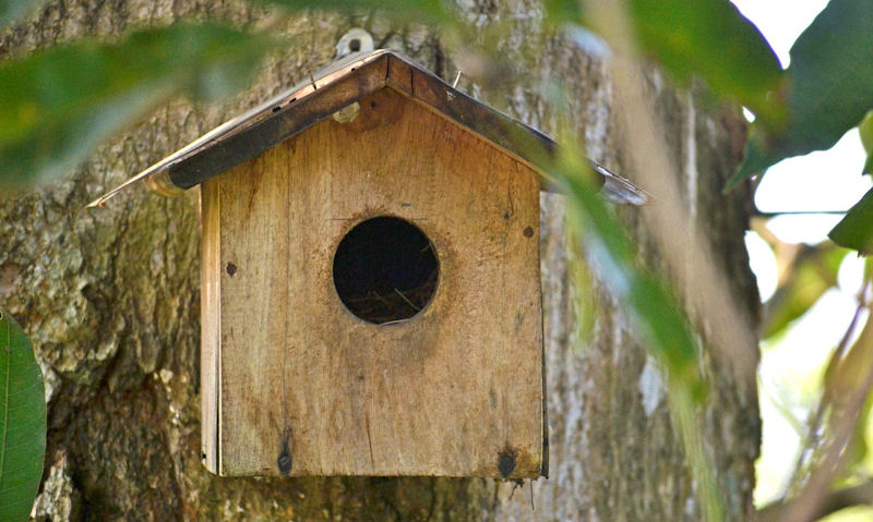 Large open rounded entrance hole on nest box fixed to tree