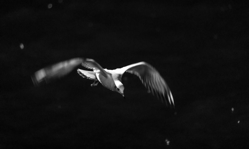Seagull flying over water at night