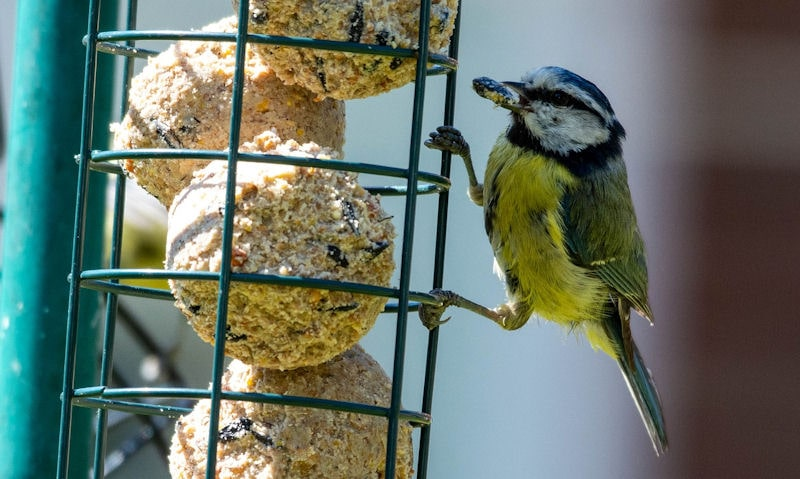 Should bird feeders be used in summer