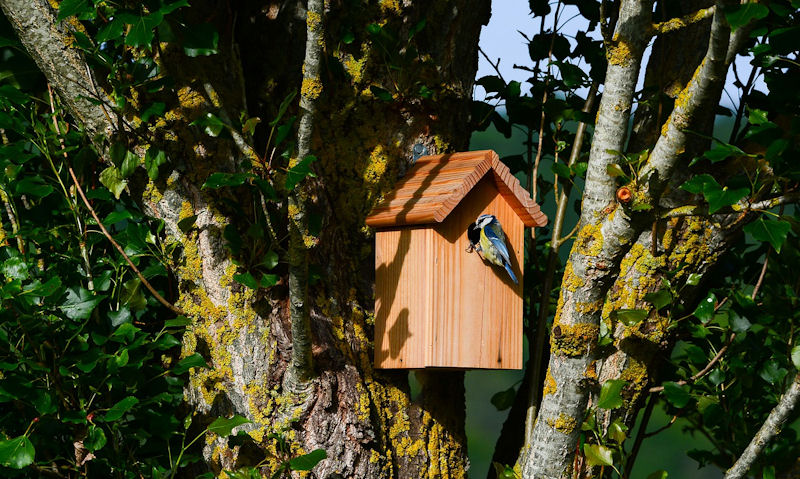 Should I put nesting material in a bird box