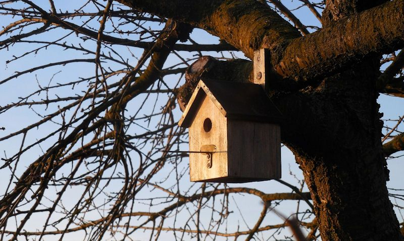 Sunset hitting bird box on tree