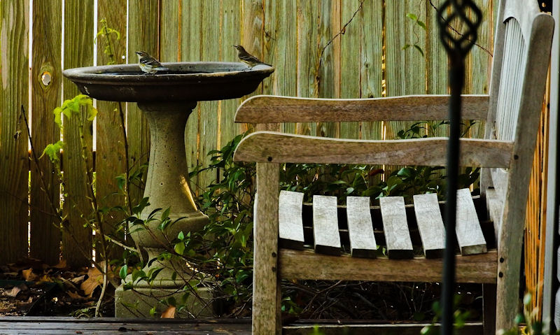 Bird Baths on Stand