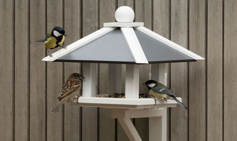 Tits and Sparrow feeding off fence mounted bird table