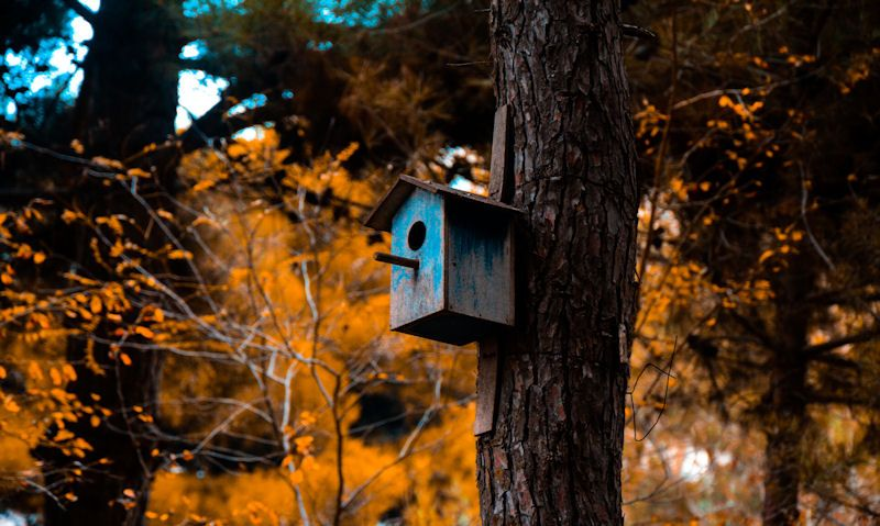 Bright blue bird box fixed to tree in natural environment