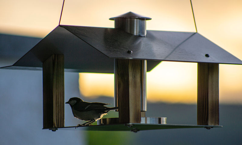 What height should a bird table be