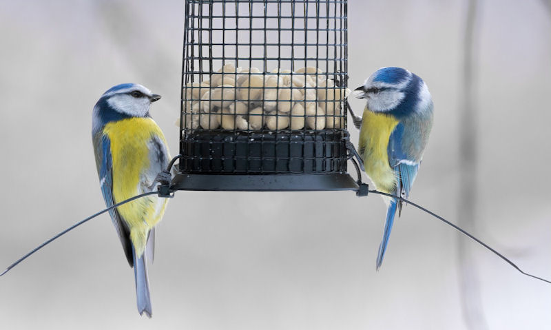When should I put out bird feeders