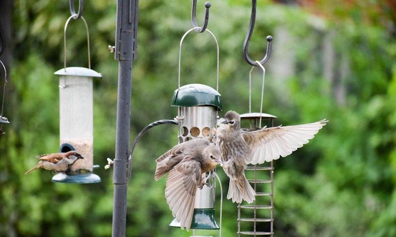 Where to hang bird feeders