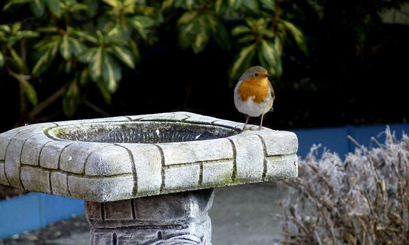 Where to put a bird bath