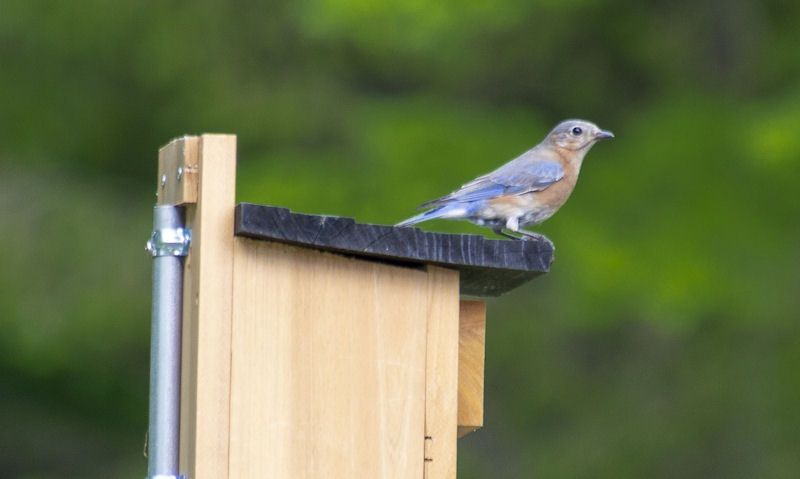 Metal pole used to freely stand up wooden bird box