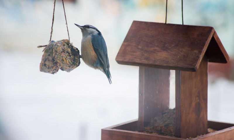 Hanging wooden seed feeder hanging in background of feeding bird